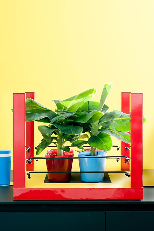 DIY Bananenpflanzen-Boxstand