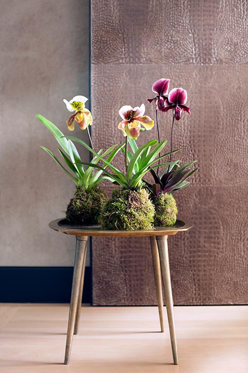 DIY fu r die Orchidee im Moos-Mantel