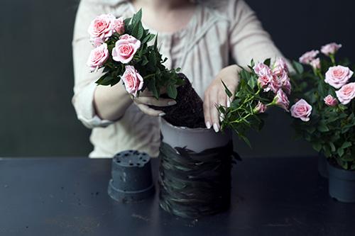 RS99521 DIY Schritt 3 Einsetzen der Topfrosen in die Vase