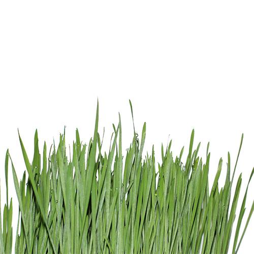 grass-1524835 1920